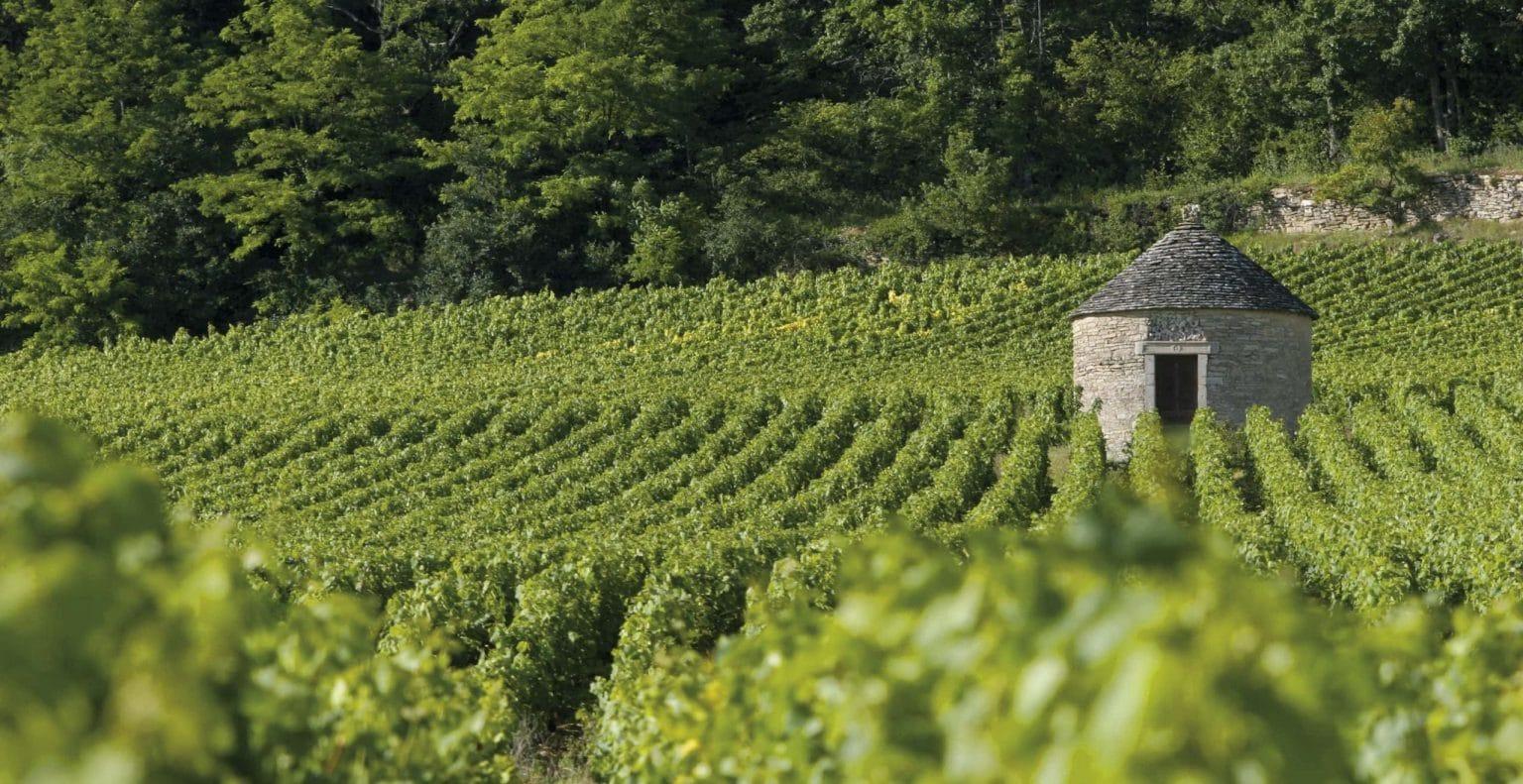 Cabotte dans les vignes - Savigny-Les-Beaune