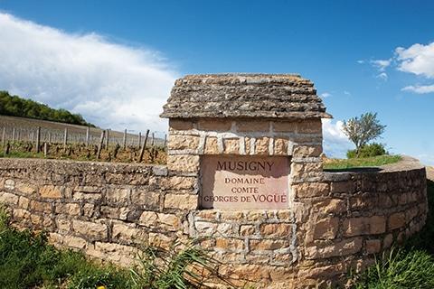 Mur de domaine comte de Voguë à Musigny.